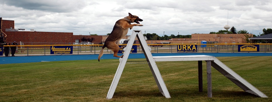 The A-Frame from the Patrol Dog Certification